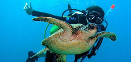 This Spring Break Dive Into Hawaii! - Eagle